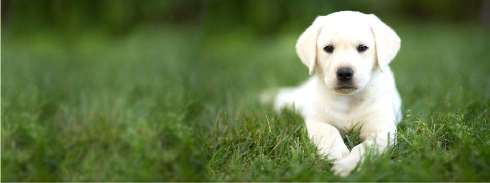 Slide 5 - Puppy